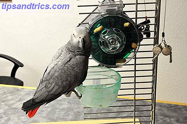 Si usted es un dueño de mascotas como yo, probablemente haga dos cosas de manera regular: mimar a su mascota y pensar en cómo optimizar el proceso de consentir a su mascota.