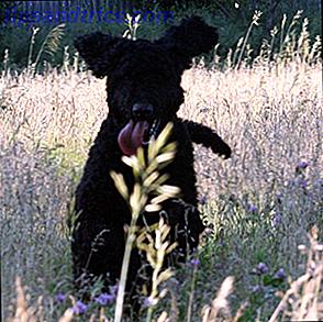 ¿Así que perdiste a tu mejor amigo?  Estos sitios web pueden ayudar a localizar a su mascota perdida