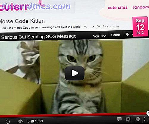 Cuterr: Krijg je dagelijkse dosis schattige dierenvideo's