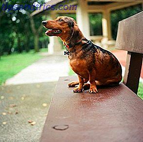 Adoptando un perro?  Echa un vistazo a estos 7 recursos para ayudarte a elegir una raza