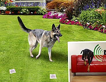 img/smart-home/687/these-pet-training-gadgets-will-keep-your-furry-friend-line.png