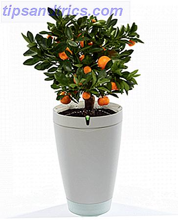 Nunca mates a una planta otra vez: 7 artilugios para hacerte una jardinería profesional